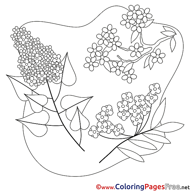 Spring Bugs Coloring and Writing Pages Freebie by