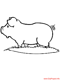 Pig image for coloring