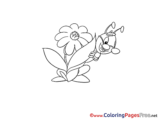 Grasshopper Coloring Sheets download free