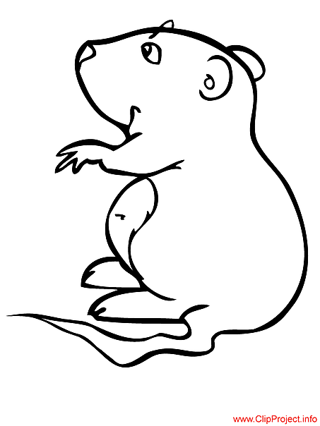Hamster coloring page free