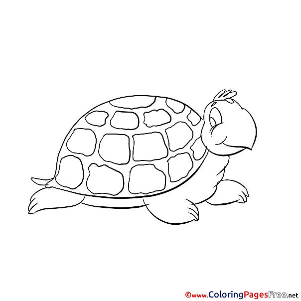 Turtle Coloring Pages for free