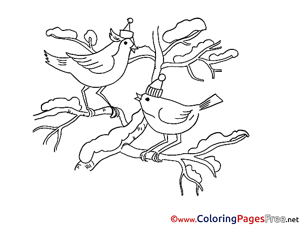 Birds Colouring Sheet download Christmas