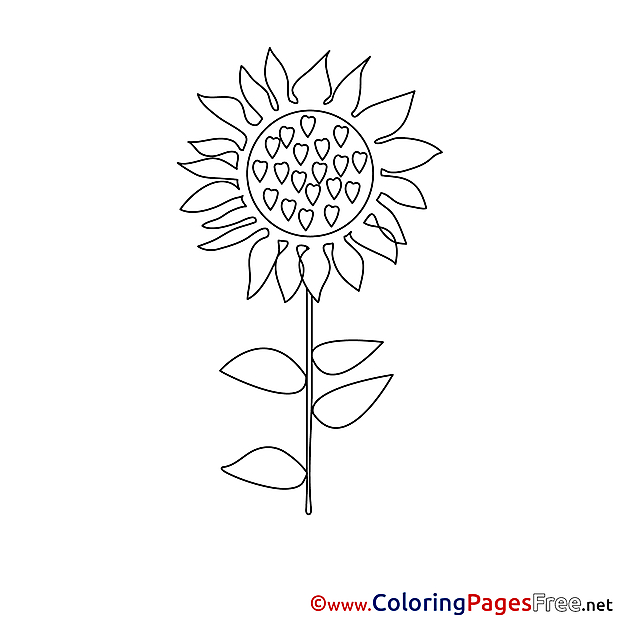 Printable Coloring Sheets Sunflower download
