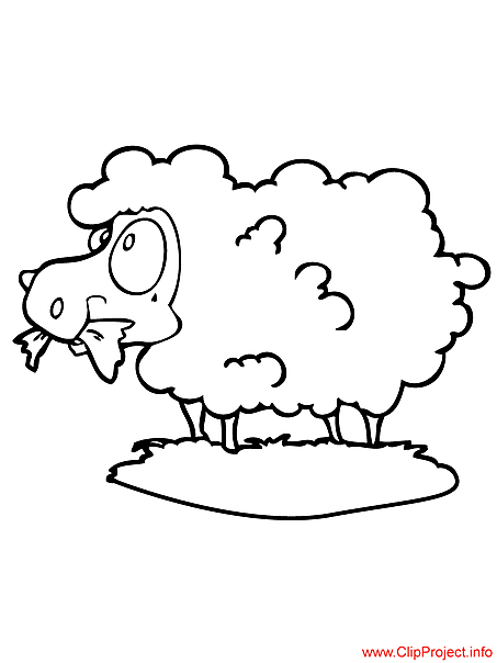 Sheep coloring page for free