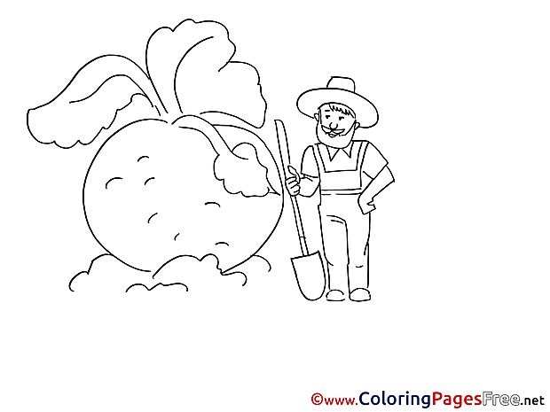 Turnip download Colouring Sheet free