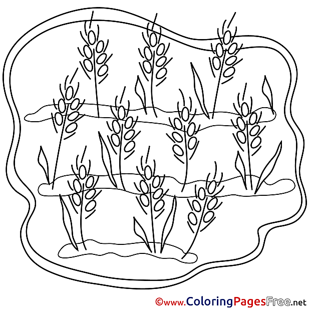 Wheat Children download Colouring Page