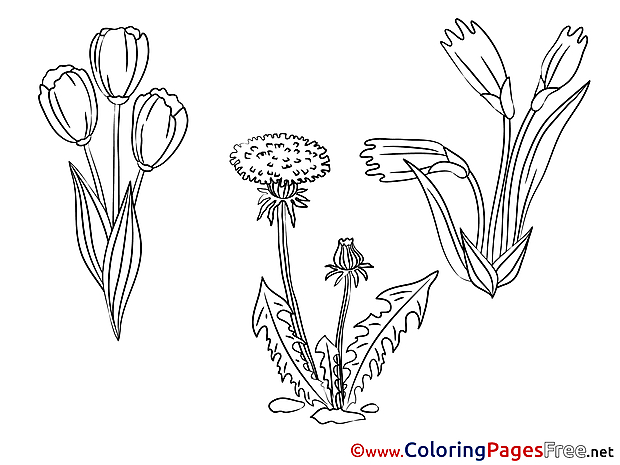 Aster free Colouring Page download