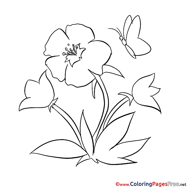 Butterfly Coloring Pages for free