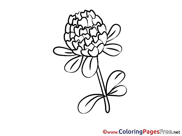 Chrisanthemum Coloring Sheets download free