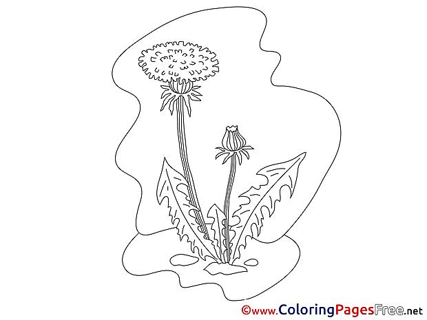 Dandelion printable Coloring Sheets download