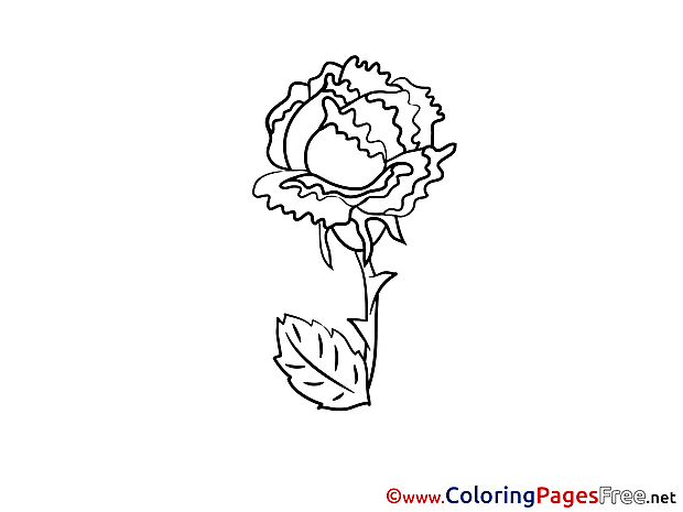 Download Rose Colouring Sheet free