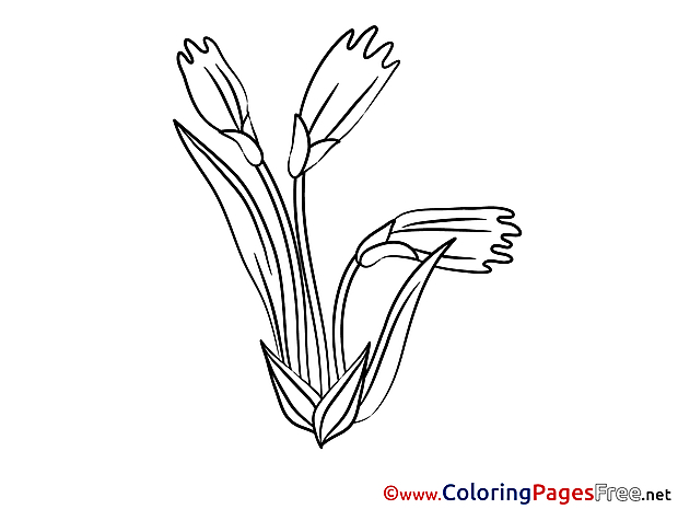 Flowering Coloring Pages for free