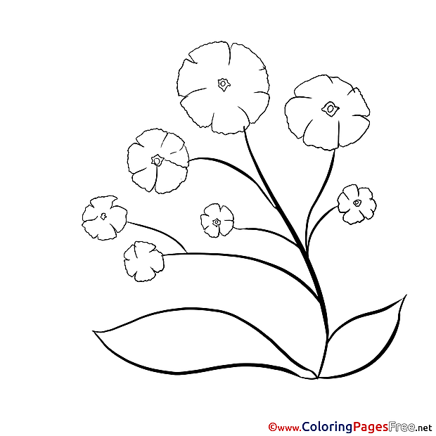 Picture Flowers Children download Colouring Page