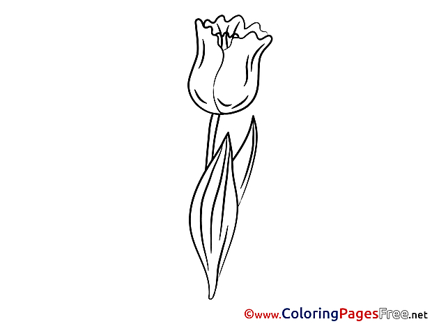 Tulip for Kids printable Colouring Page