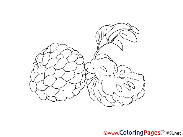 Download Fruits Colouring Sheet free