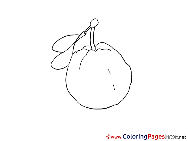 Quince Coloring Sheets download free