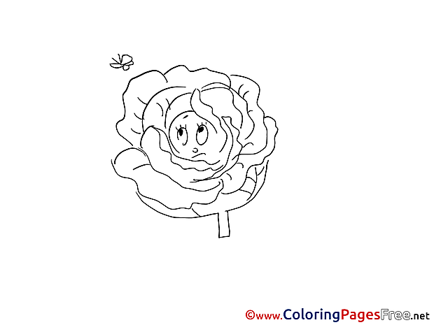 Cabbage Colouring Sheet download free