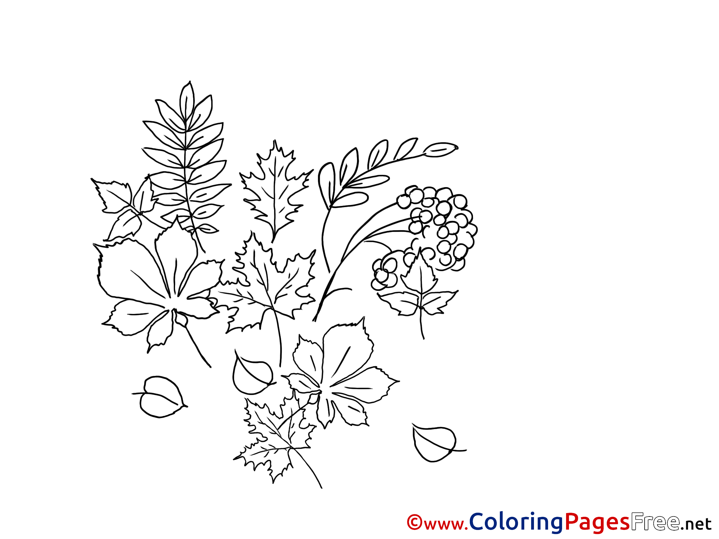 herbs coloring pages - photo#39