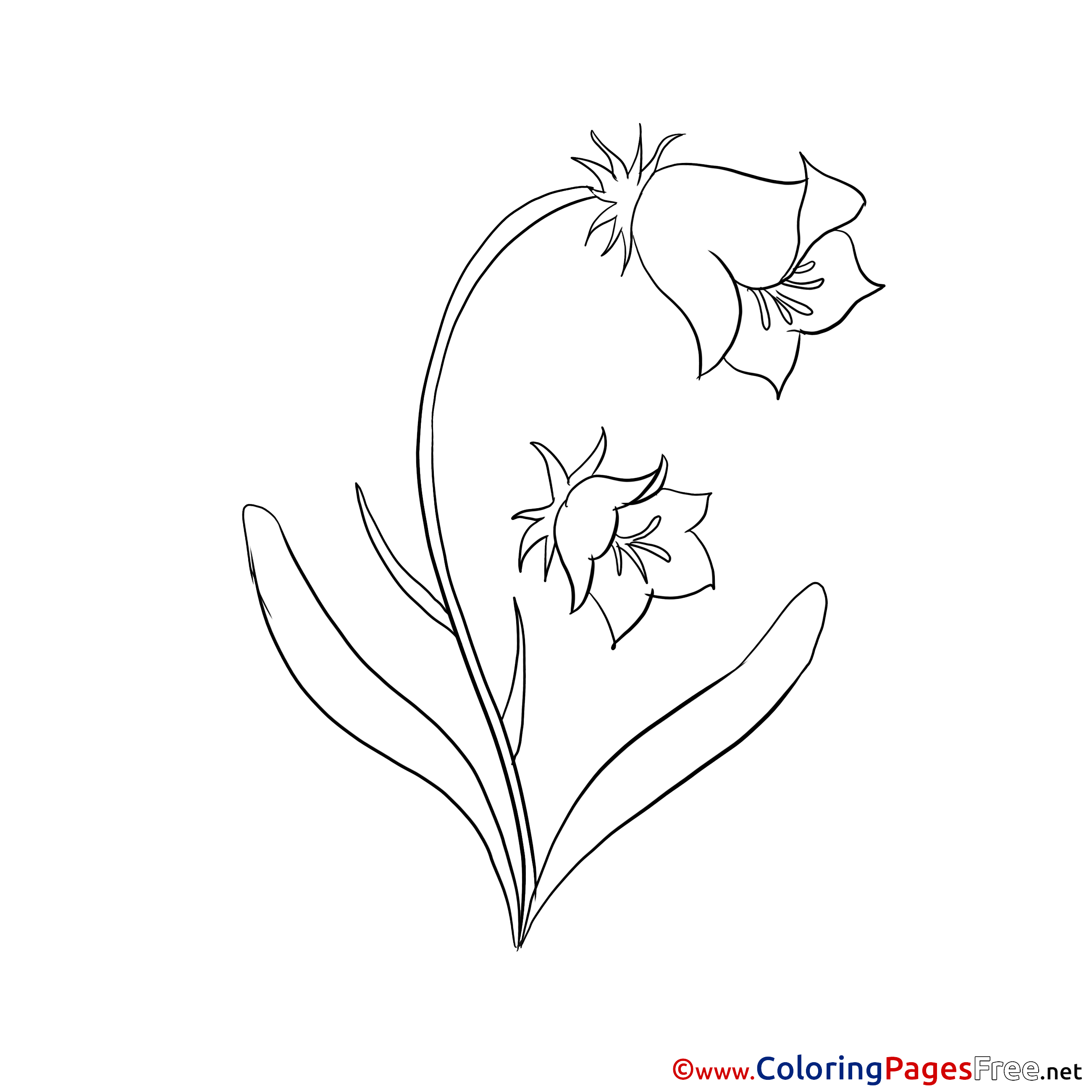 Bluebell Coloring Sheets Download Free