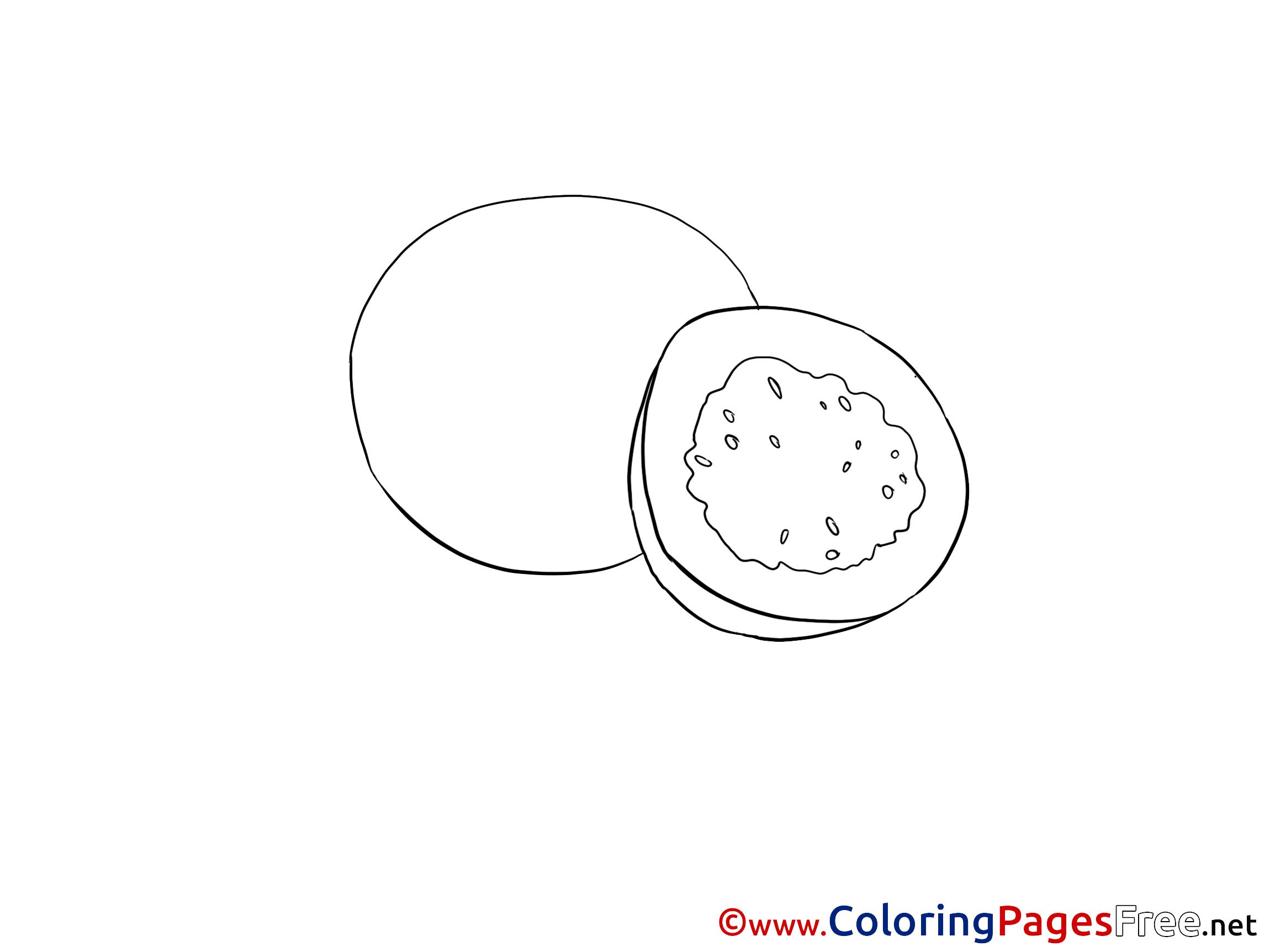 Kiwi Coloring Image Print in 2020   1725x2300