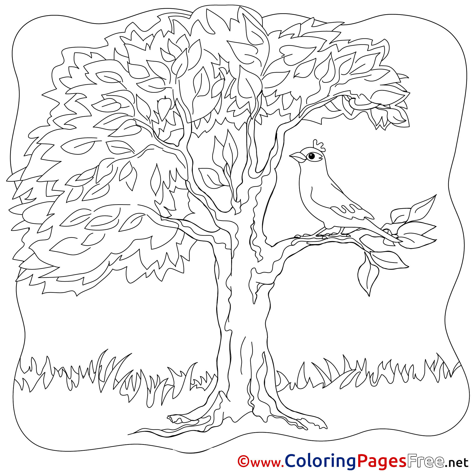 Bird Colouring Page Tree Summer free