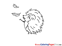 Hedgehog for free Coloring Pages download