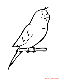 Parrot printable coloring page
