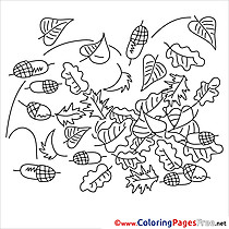 Acorn printable Coloring Pages for free