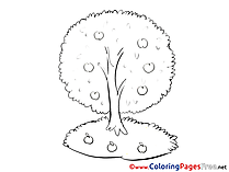 Apple Tree Colouring Sheet download free