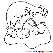 Apples printable Coloring Pages for free