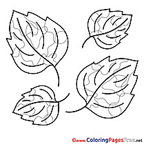 Beautiful Leaves Kids free Coloring Page