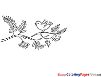 Bird for free Coloring Pages download