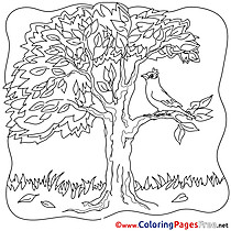 Bird Tree printable Coloring Sheets download