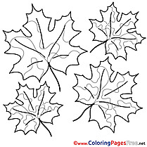 Maple Leaves Colouring Sheet download free