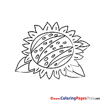 Sunflower Colouring Sheet download free