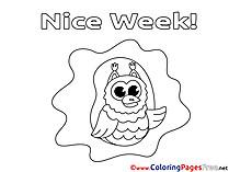 Owl Colouring Sheet download Nice Week