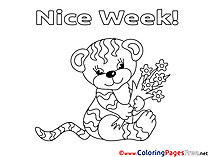 Tiger Colouring Page Nice Week free
