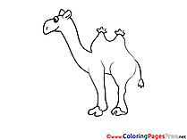 Camel Kids download Coloring Pages