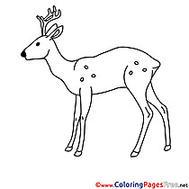 Deer Colouring Page printable free