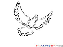 Pigeon printable Coloring Sheets download