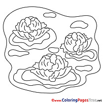 Cabbage free Colouring Page download