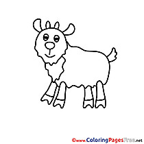 Download Colouring Sheet Sheep free