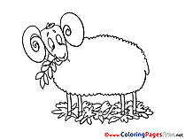 Sheep printable Coloring Pages for free