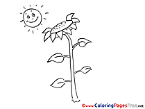 Sun with Sunflower Coloring Sheets free