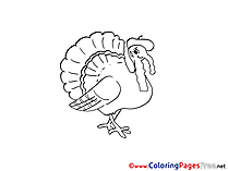 Turkey Coloring Pages for free