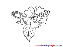 Bud Coloring Sheets download free
