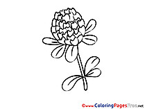 Chrisanthemum Coloring Sheets download free