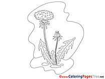 Dandelion printable Coloring Sheets download