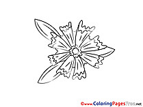 Download Flower printable Coloring Pages