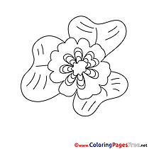 For Kids Flower printable Colouring Page